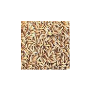 Pale Oat Malt