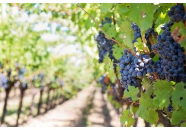 Vína z moravy a čech